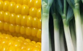 【スマート農業で作った野菜をいち早くお届け!】スイートコーン20本+ZEPPIN長ネギ5kg