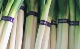 【スマート農業で作った野菜をいち早くお届け!】ZEPPIN長ネギ5kg