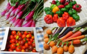 心を込めてつくった季節のユニークお野菜セット2×2回分と農園で取れた野菜の加工品×2