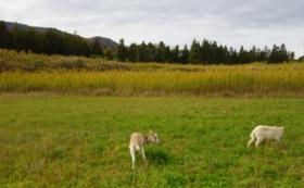 西畑村の牧場計画を応援コース
