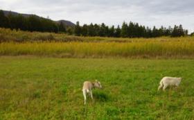 西畑村の牧場計画を全力応援コース