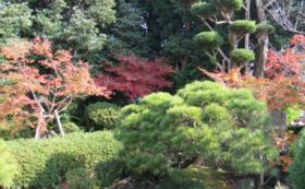 萩の歴史と自然を堪能できる宿の実現を応援!