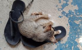 野良猫ファミリーを救いたい04