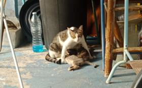 野良猫ファミリーを救いたい06