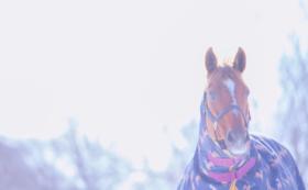 【重賞馬コース】オリジナルグッズ3点