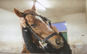 【G3馬コース】2ショット写真撮影・台紙付き