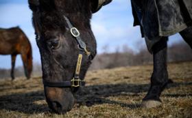 【G1馬コース】2ショット写真撮影・台紙額縁