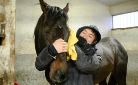 【年度代表馬コース】引退馬半日世話体験