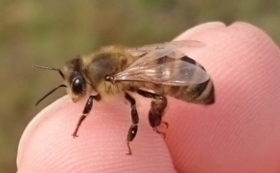 【応援コース】ニホンミツバチの飼育活動を全力応援