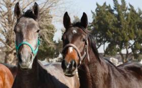 【超レアプラン】購入馬の命名権