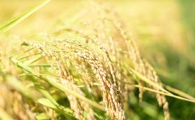 【ご自身や大切な方へ】自然栽培のお米で応援