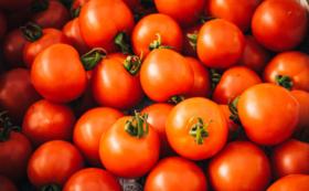 <団体・法人向け>みんなで楽しむ無農薬スイカとトマトコース