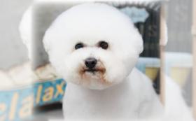 【オンライン講座】一般飼い主さん向けのオンラインお手入れ講座