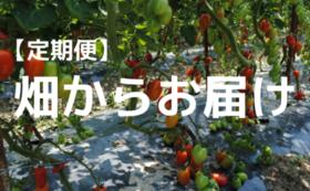 畑からお届けコース【定期便・6ヶ月】