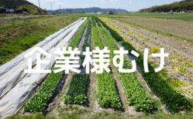 【企業様むけ】農業体験イベント主催コース
