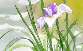BOOKS弁財天オリジナル絵本『おじいさんのハナショウブ』