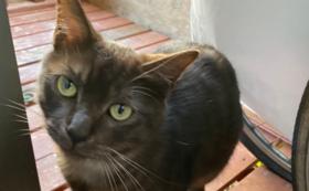 【全力応援コース】保護猫の写真