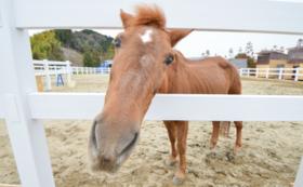 【応援!】引退馬・養老馬が安心できる環境へ