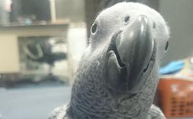 【リターン不要の方向け】動物たちとピクニカ共和国を応援