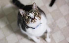 【応援コース】猫が安心して暮らせるように。