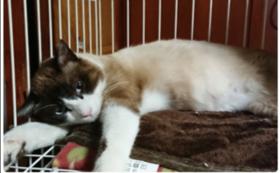 【応援コース】保護した猫が幸せになりますように。