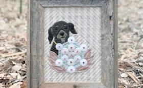 ヒーリングキルト(愛犬・愛猫など)