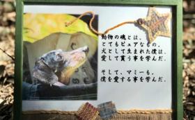 【応援コース】見守り隊 応援団になる🐾