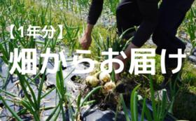 畑からお届けコース 旬の野菜セット【定期便・1年】