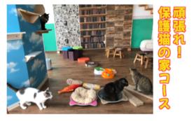 【リターン不要】頑張れ!保護猫の家コース