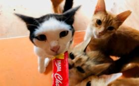 シャディ保護猫ハウス応援コース