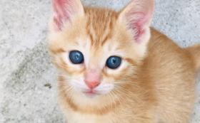シャディ保護猫ハウス維持応援コース