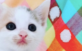 【今いる猫さんたちの暮らしを守る】