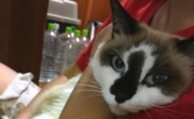 【純粋応援コース】猫の小屋の看板にお名前を記載