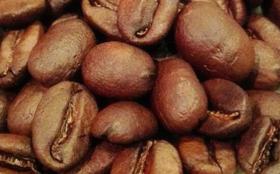 【希少種贅沢豆入り!】定期配送9ヶ月 OTTANTA COFFEEおすすめ焙煎豆150g×2種類【合計2.7kg】