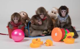 <限定5名様>お猿さんの命名権