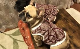 和装犬服をお揃いで作成・プレゼント