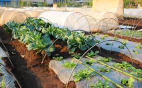 自然栽培農地レンタルコースC