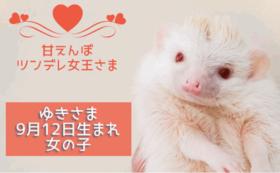 しゃべコミュで利用できる5000円分クーポンプレゼント