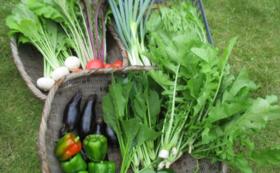 春・夏・秋と年3回の自然農野菜のセット