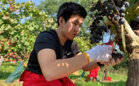 【リターン4点】北照ワイン(旅路)プロジェクト応援隊コース