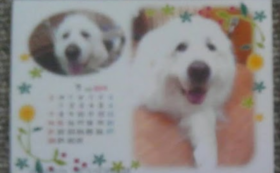 お礼のお手紙に当月分photoカレンダーを添えて