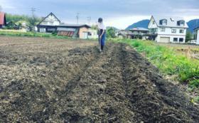 プロジェクトで再生した畑で作った白馬村のお野菜とお手紙