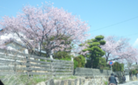 【安岡ゆりこ全力応援コース】お手紙+活動報告書