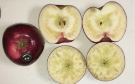 蜜だらけの大玉プレミアム林檎・北紅 3㎏(約6個) & ドライアップル1袋