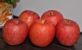 葉とらずサンフジ 5㎏(約14~18個) & ドライアップル1袋
