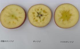 贈答用プレミアム林檎・コスモサンフジ5㎏(約14~18個)&ドライアップル1袋