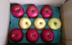 もひかん林檎のオーナー制 特選品 黄色と赤のミックス3㎏(約9個)& ドライアップル1袋 × 6回