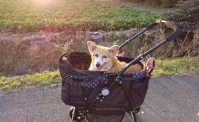 桜咲くハナちゃんコース