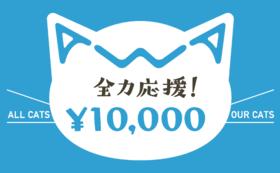【リターン不要】あわねこ全力応援コース(10,000円)