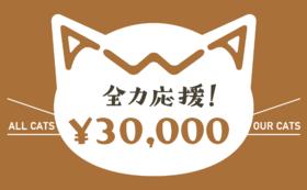 【リターン不要】あわねこ全力応援コース(30,000円)